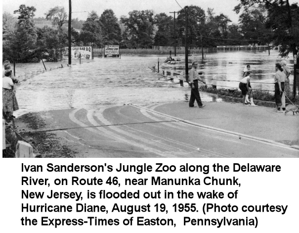 Ivan Sanderson's Zoo Flooded out August 19, 1955